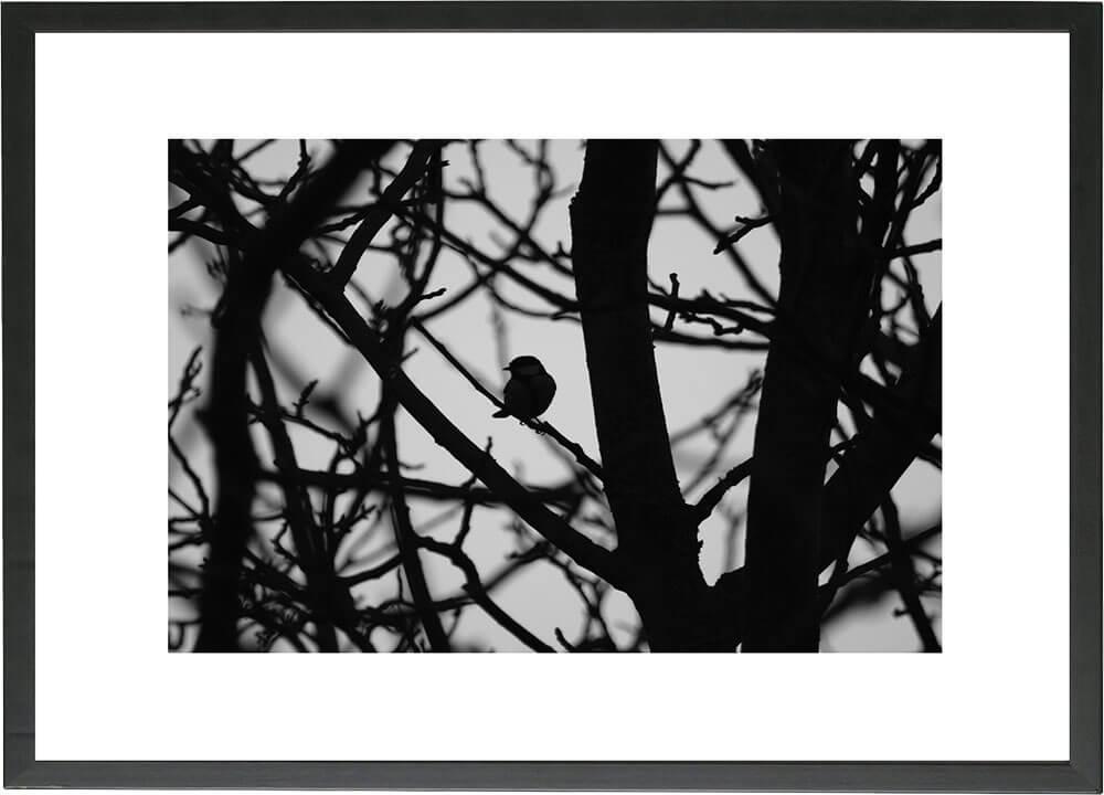 Ella Arts - gerahmte Fotografien